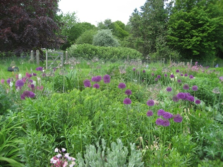 Alliums in Nectar Beds